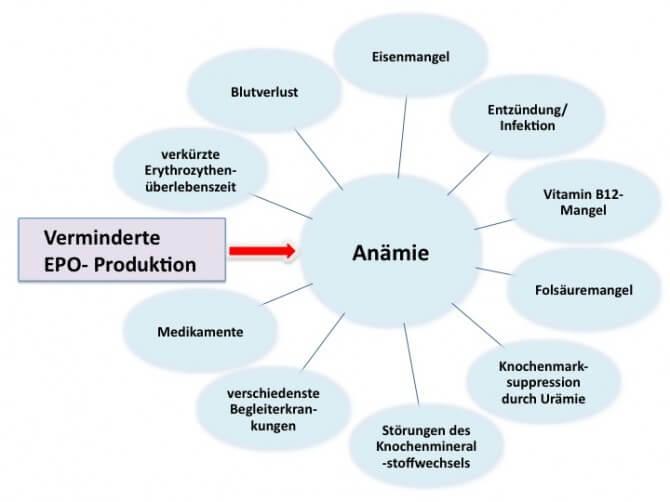 Ursachen der Renaten Anämie